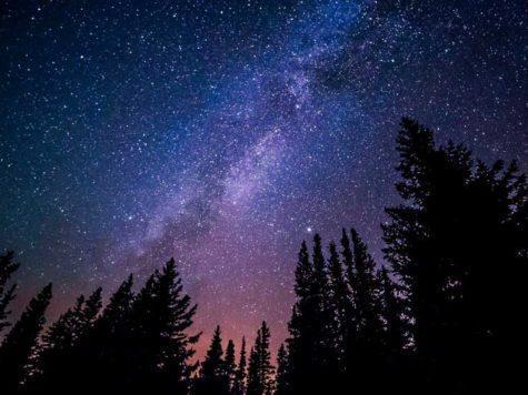 Млечный путь, галактика, космос, звезды, планеты, ночное небо, лес, хвойный деревья