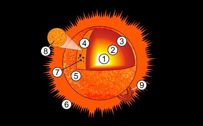 Солнце, структура, строение, схема, диаграмма, рисунок