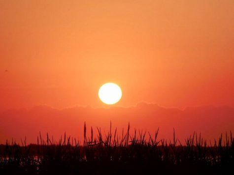 Солнце, рассвет, восход, утро, новый день, оранжевое небо, камыш, озеро