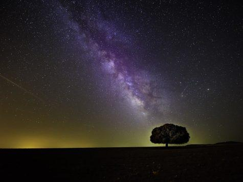 Млечный путь, галактика, ночное небо, дерево, звезды, иллюстрация